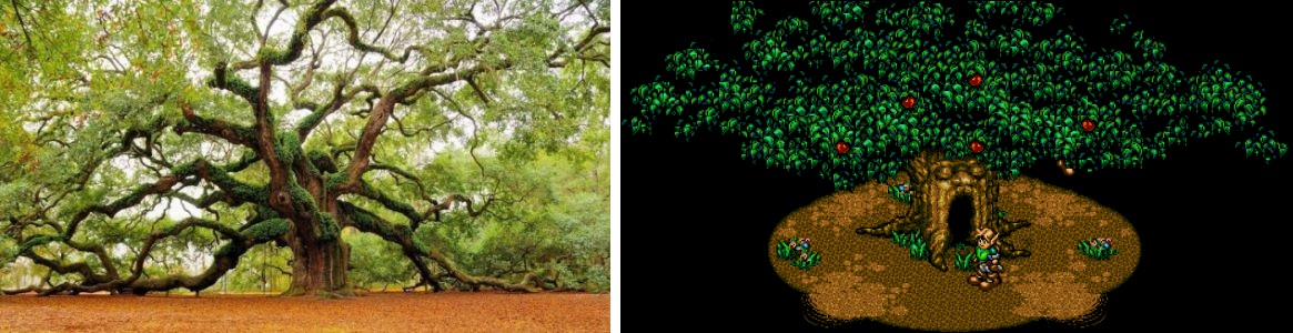 Chêne Ange de Charleston et arbre Tibor