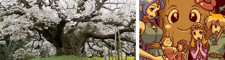 Cerisier géant du Japon et arbre Bojo