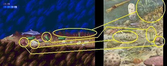 Ecco le dauphin Formations rocheuses du fond de l'océan