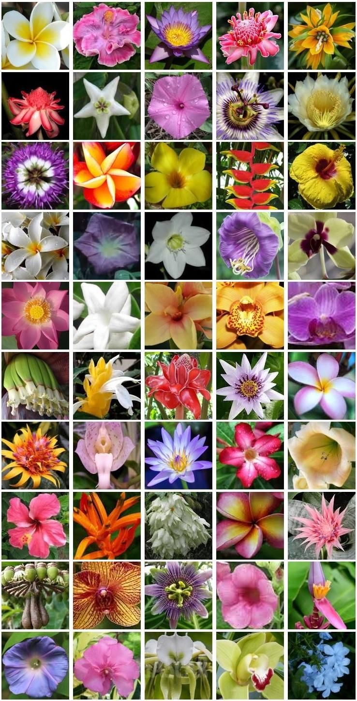 fleurs des îles tropicales
