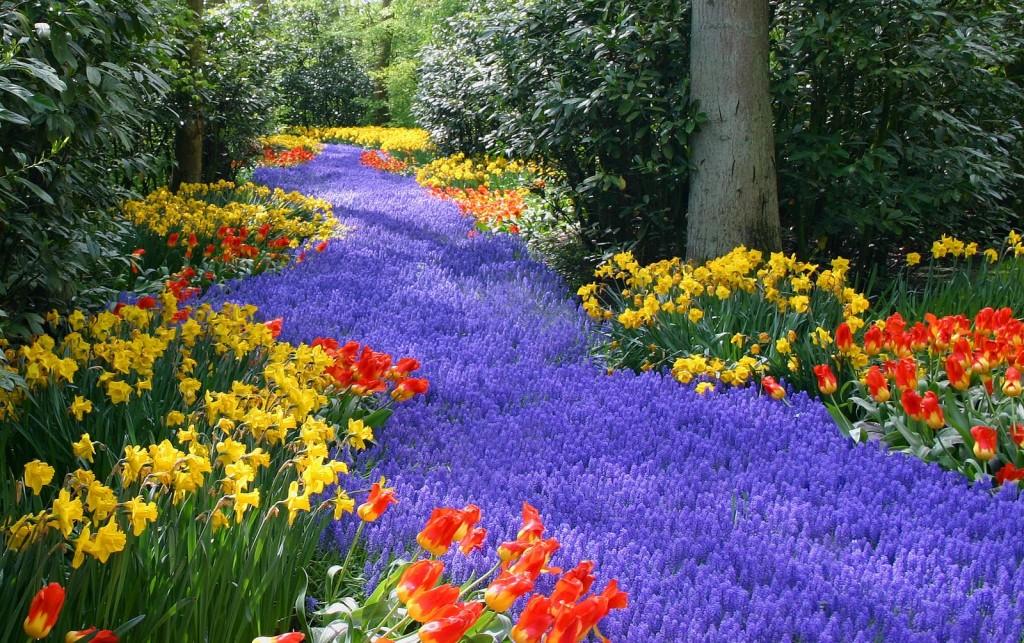 Keukenhof  rivière de fleurs