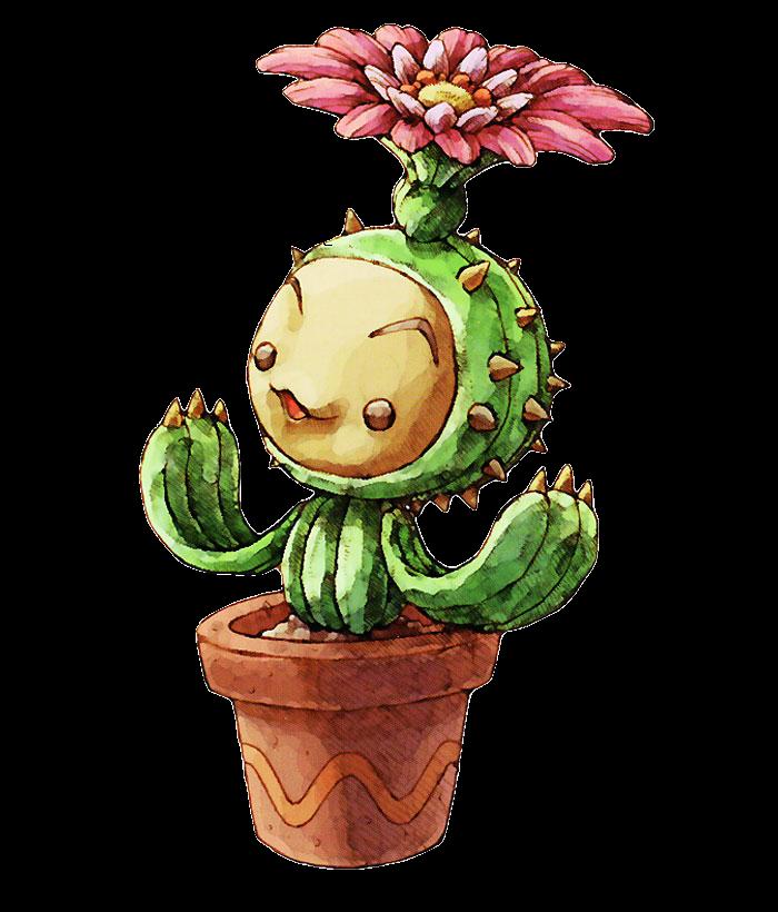 P'tit Cactus